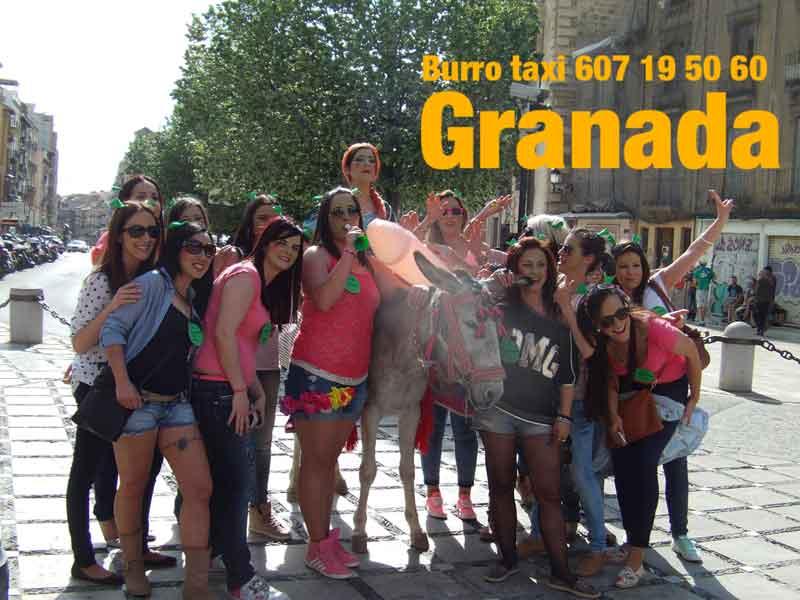 burrotaxi-granada+12